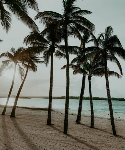 Picture of palm trees on Mauritius Island