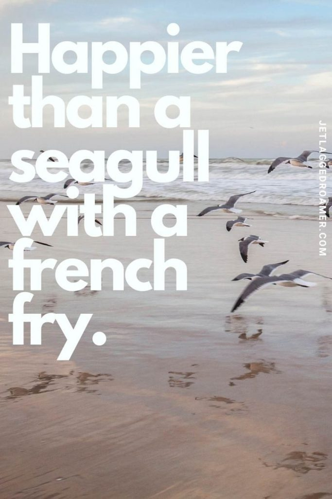 """Seagulls flying along the shoreline on a sunny day and a quote that says """"happier than a seagull with a french fry. """""""