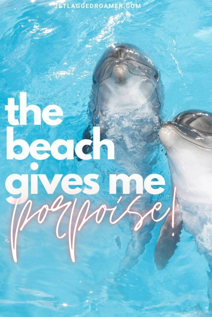 """two dolphins in electric blue water looking at the camera with a quote that says """"the beach gives me porpoise!"""""""