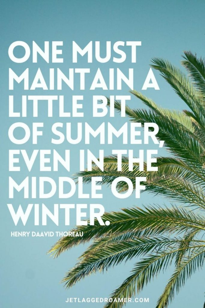 QUOTE THAT SAYS ONE MUST MAINTAIN A LITTLE BIT OF SUMMER EVEN IN THE MIDDLE OF WINTER. IMAGE OF A PALM TREE ON A SUNNY DAY.