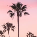 Sunset caption picture of palm trees and a sunset that is pink and yellow