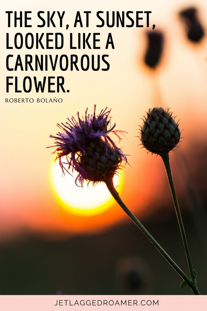 """Beautiful sunset quote that reads """"The sky, at sunset, looked like a carnivorous flower."""" ― Roberto Bolaño. Flower in front of a sun setting."""
