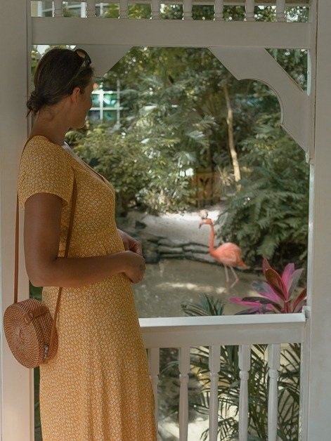 Me looking at a flamingo at the butterfly garden in Key West.